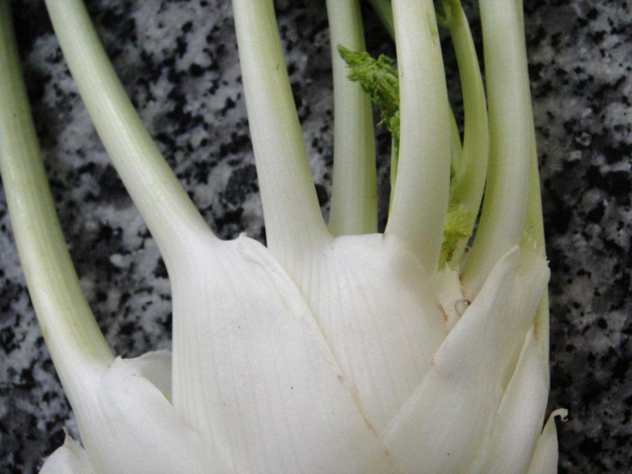 Fennel in close up