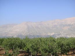 orchard and mountain
