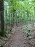 haresfield walk (14)