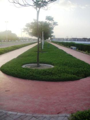 running track Umm Suqeim
