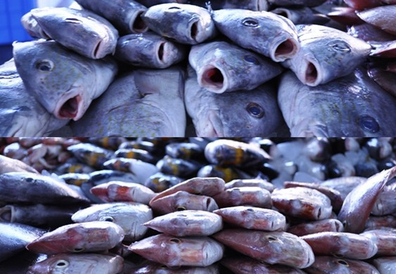 fish at the Deira fish market Dubai