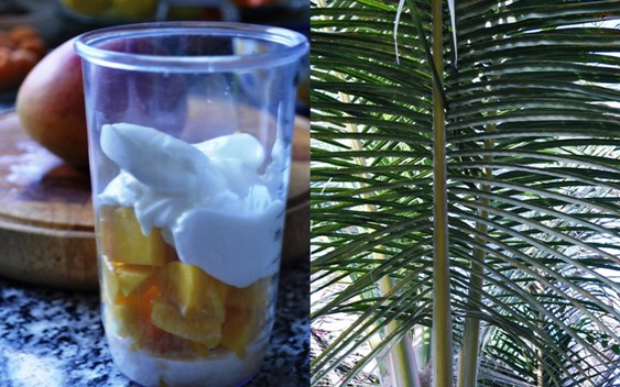 Ingredients for smoothie and palm trees