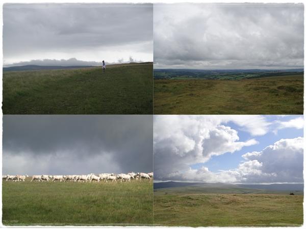Skies and sheep