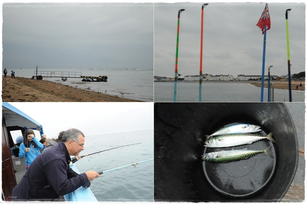 Mackerel fishing in Exmouth