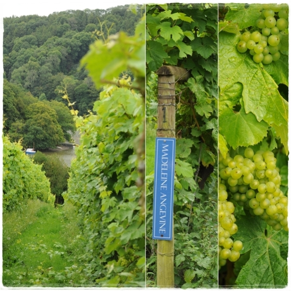Sharpham vines