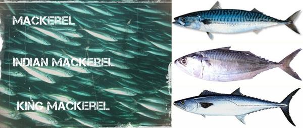 Types of mackerel