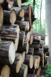 Logs stacked in the wood