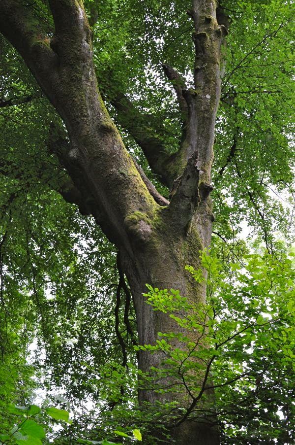 Tree on the Bathhurst estate