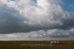 Dartmoor by My CustardPie-1-2
