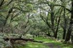 Dartmoor by My CustardPie-1-7