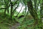 Dartmoor by My CustardPie-2