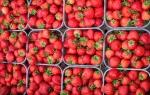 English strawberries