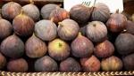 Figs in season – My CustardPie-1