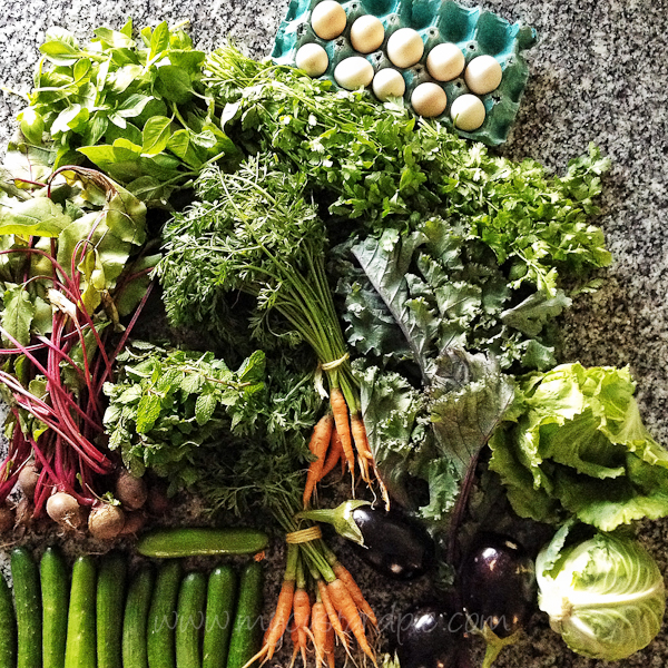 Vegetables from the farmers market