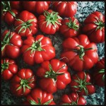 Tomatoes from farmers market My CustardPIe