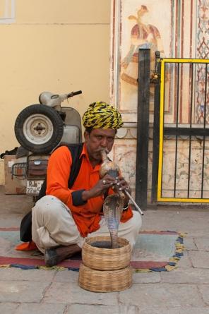snake charmer poses