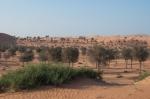 Buying booze in UAE – My CustardPie-2-2