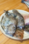 Learning what to do with fish – mycustardpie.com-4