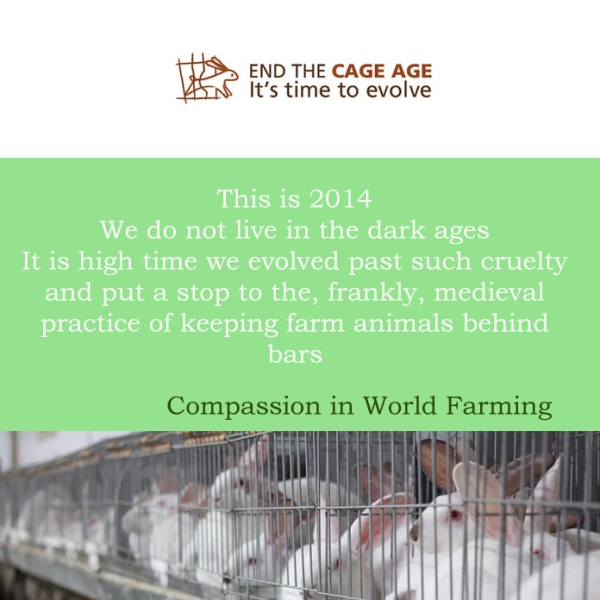 End the cage age - find out more on compassion in world farming or mycustardpie.com