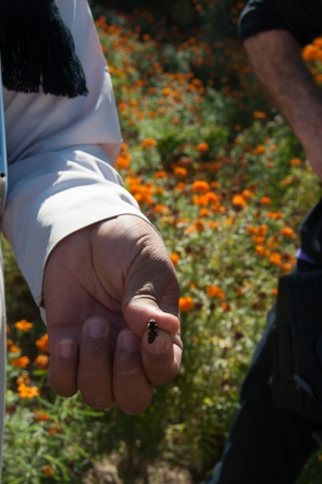 Marigolds and bee