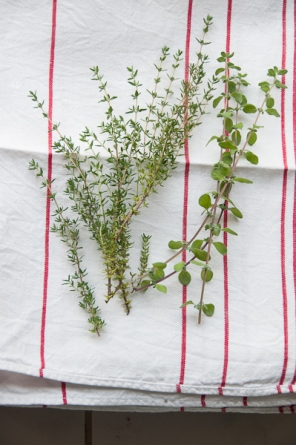 thyme and marjoram
