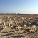 Sir Bani Yas Island - My Custard Pie