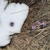 Flowers in snow in Georgia - mycustardpie.com