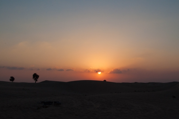 Watching the sun go down and meeting camels in the desert. How many words are there for camel in Arabic? Find out on mycustardpie