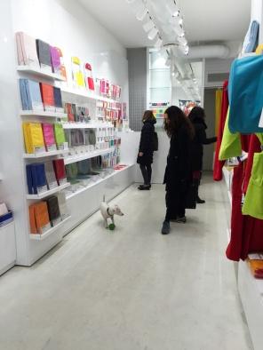 Dogs in Milan Italy on mycustardpie.com