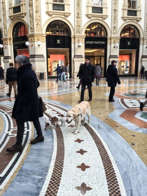 Dogs in Milan Italy on mycustardpie.com