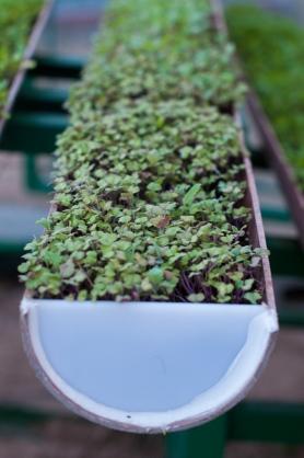 Urban farming. Earth day at Jebel Ali hotel, Dubai - on mycustard.pie.com