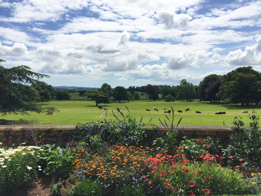 Killerton - a National Trust house near Exeter. Summer days in the UK on mycustardpie.com