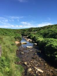 On Dartmoor. Summer days in the UK on mycustardpie.com