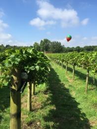 Strawberry picking. Summer days in the UK on mycustardpie.com
