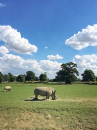 The Cotswold Wildlife Park in Burford. Summer days in the UK on mycustardpie.com