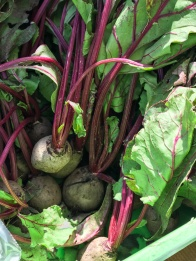 Beetroot - Whats in season in the UAE in October