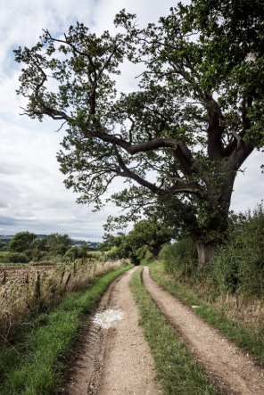 a country lane by a large tree