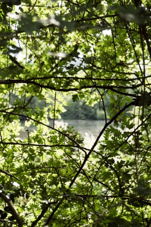 view of a reservoir through trees