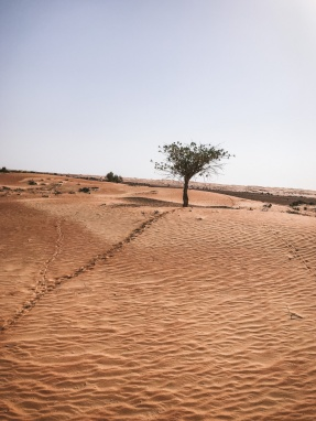 Al Maha-8735
