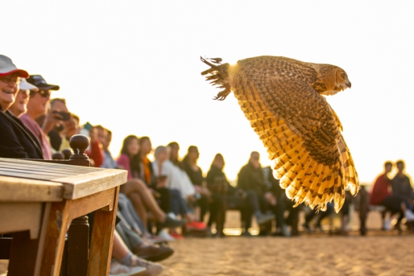 Owl flying watched by a circle of people