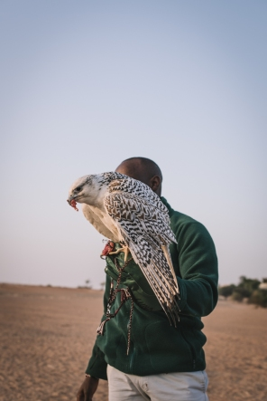 a falcon being held