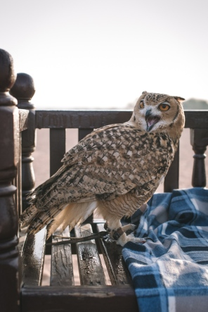 an owl sitting on a bench