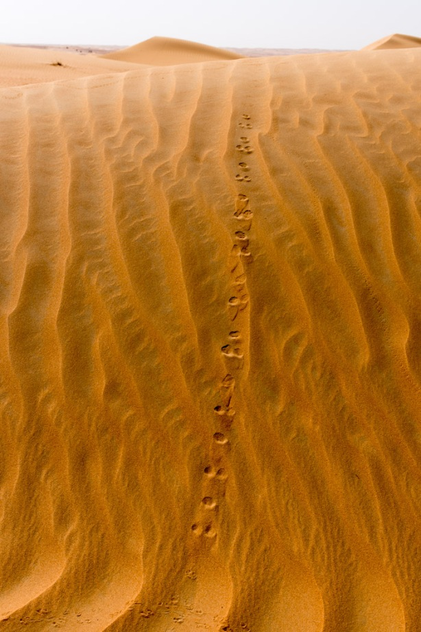 close up of animal tracks in the sand