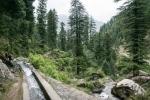Himachal_Pradesh-05196