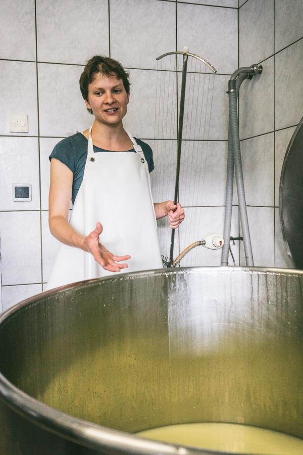 Milk inside the cheese vat