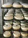 Reblochon in a drying room