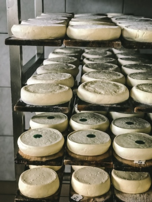 Reblochon in a drying room